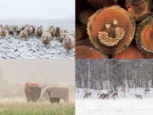 Winterkaarten 2015 - set van vier